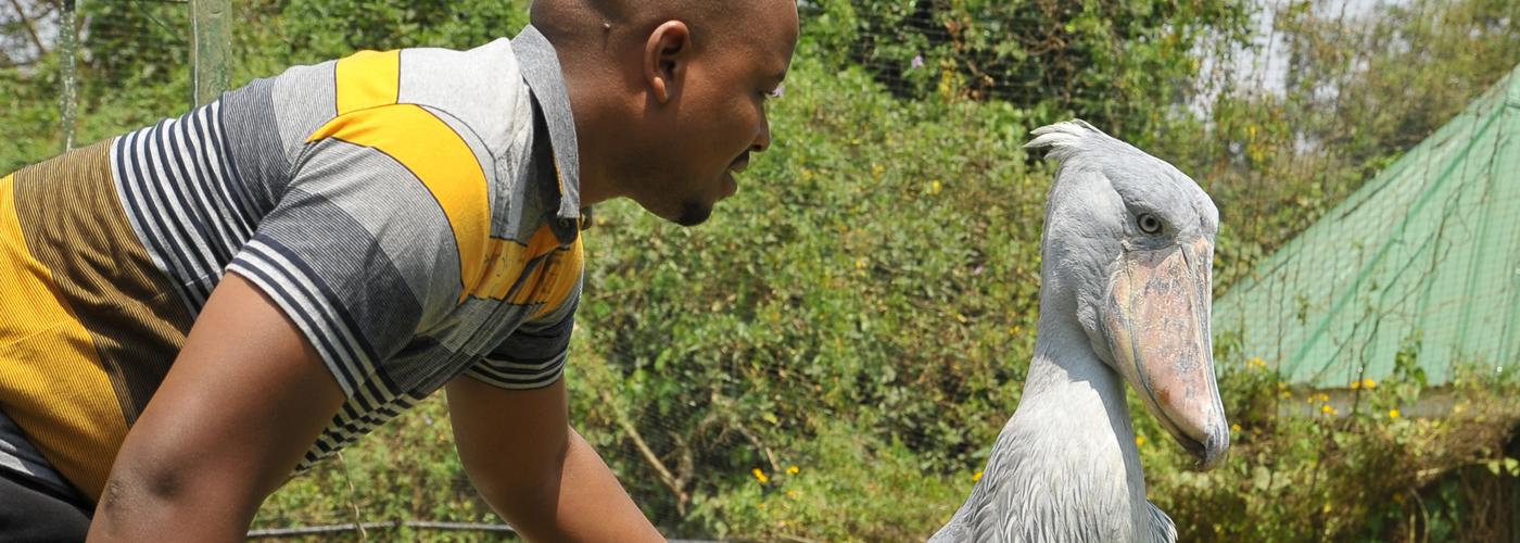 Uganda tours - birding safaris